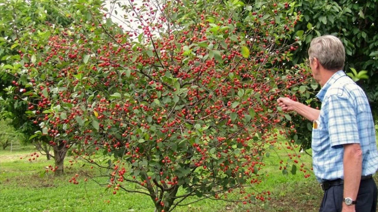 Backyard Fruit Tree Layout - YouTube