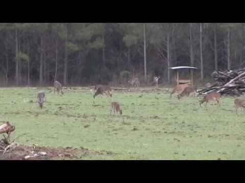 Deer Hunting In Marengo County Alabama