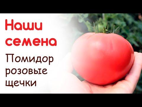 "Сорт помидоров ""Розовые щечки"", свои семена   выращивание   помидоров   башмакова   татьяна   розовые   томата   щечки   тост   сорт   дача"