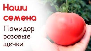 видео семена томата розовый фламинго купить. Цена, фото, описание товара, отзывы. Доставка Киев, Украина