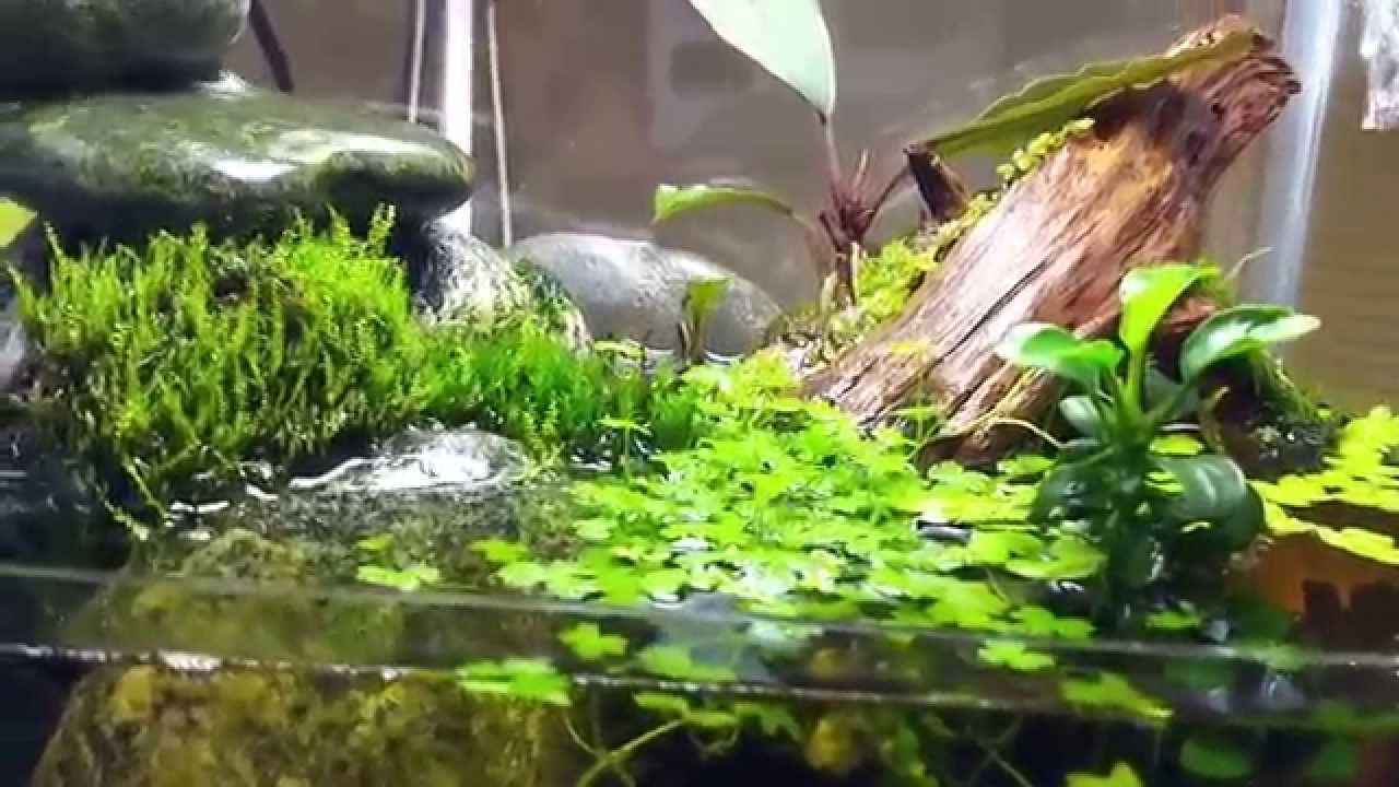 My Homemade Desktop Paludarium Doovi