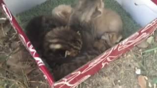 Муссон-коробка с котятами.