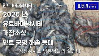 민트 궁평 해솔 등대 바다낚시터 개장소식 유터뉴스