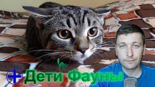 Можно ли стричь кошек? Советы ветеринара