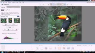 ویرایش،مرتب سازی و به اشتراک گذاری تصاویر با picasa/دانلود Picasa 3.9 +آموزش تصویری