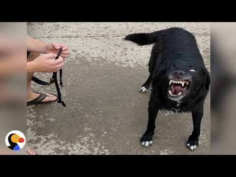 Ninja Dog REALLY Doesn't Want To Leave the Beach  | The Dodo