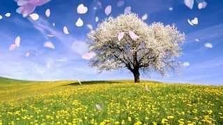 A Walk in the Meadow نزهة في الروضة