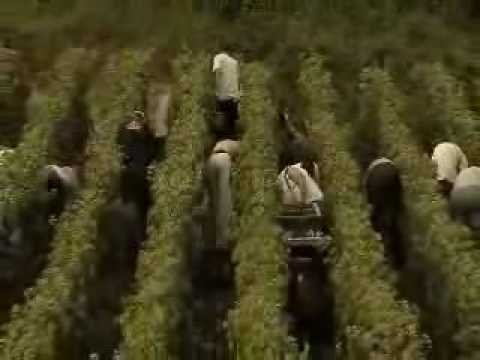 French wine : Champagne region