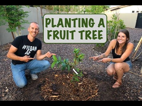 FRUIT TREE BASICS | BACKYARD GARDENING
