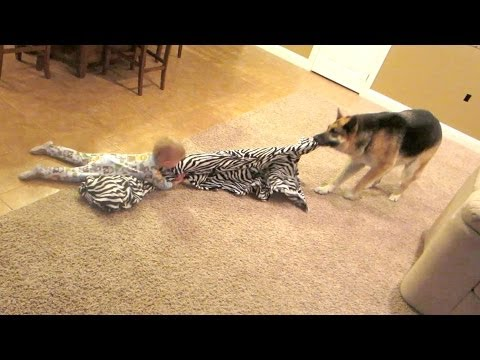 Thumbnail: Dog vs Baby!