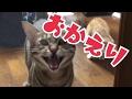 飼い主のお出迎えをする猫たちの反応が凄まじかった!