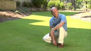 Gambar cover What type of grass is best for your lawn? Unlimited Landscaping Video Blog