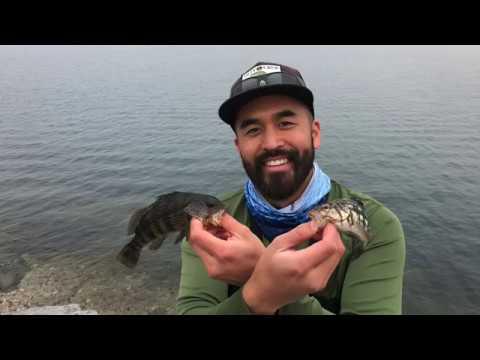 MARINA DEL REY: FISHING WITH SABIKI RIGS