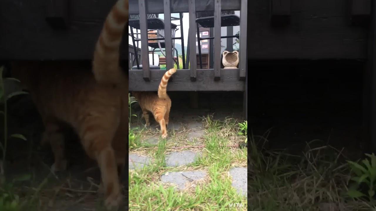 고양이가 노는 모습?