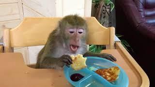 Масленица) ( домашние обезьяны)