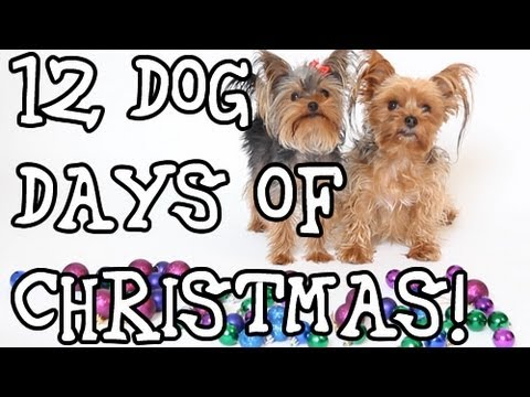 Dogs Sing 12 Days of Christmas Funny Christmas Song!