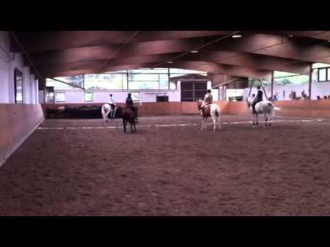 Rinderarbeit Klasse M, deutsche Meisterschaft Working Equitation 2014, geritten von Carolin Schömer