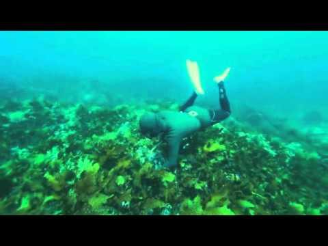 Vidéo Laurence Wajntreter | Voix Documentaire Société - Narration