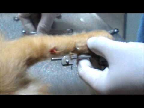 Rimozione di fissatore esterno in un cane youtube - Colorazione immagine di un cane ...