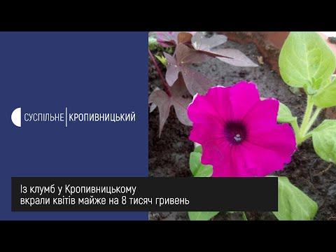 UA: Кропивницький: Із клумб у Кропивницькому вкрали квітів майже на 8 тисяч гривень