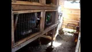 Жизнь кроликов часть 1