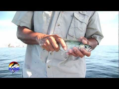 Rigging Live Bait With Circle Hooks