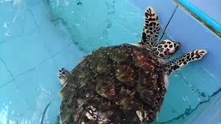 เที่ยวศูนย์อนุรักษ์พันธุ์เต่าทะเล กองทัพเรือสัตหีบ