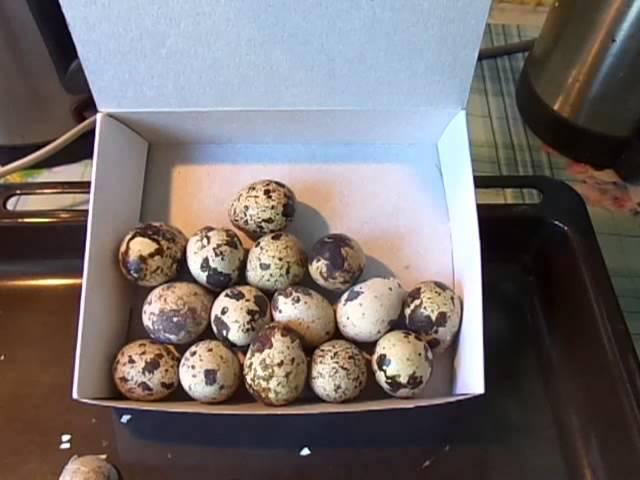 Источник кальция Скорлупа перепелиных яиц.