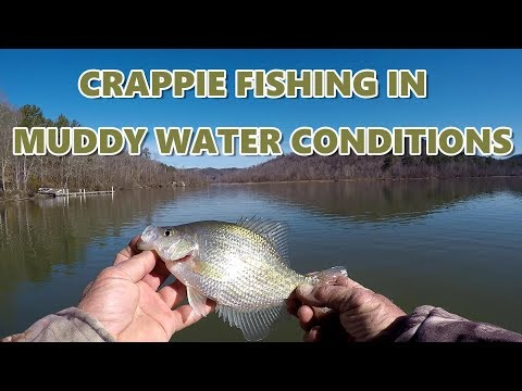 How To Catch Crappie In Cold Muddy Water Conditions