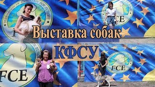 Выставка собак КФСУ в Николаеве Кубок Юга Украины 2018