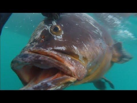 Mero 34 Kg Del Pescador Javier Camacho Del Equipo Mares