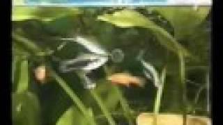 Аквариум, болезни рыбок. Часть 1.