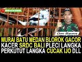 Update Harga Murai Batu Medan Blorok Gacor Kacer Pleci Langka Cucak Ijo Srdc Dll Dikios Om Bam  Mp3 - Mp4 Download