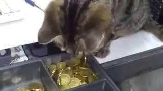 Смешные кошки большая подборка  Приколы кошки видео онлайн Приколы, ДТП