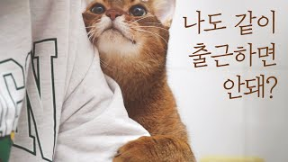 ENG) Going to work with the cute cat Milo.