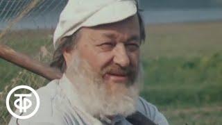 Переходный возраст (1981)