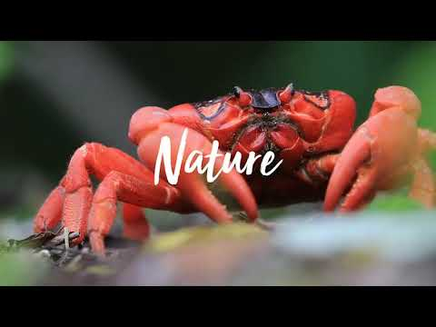 Christmas Island - A Natural Wonder (TV Commercial - October