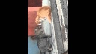 Кошки метят территорию.