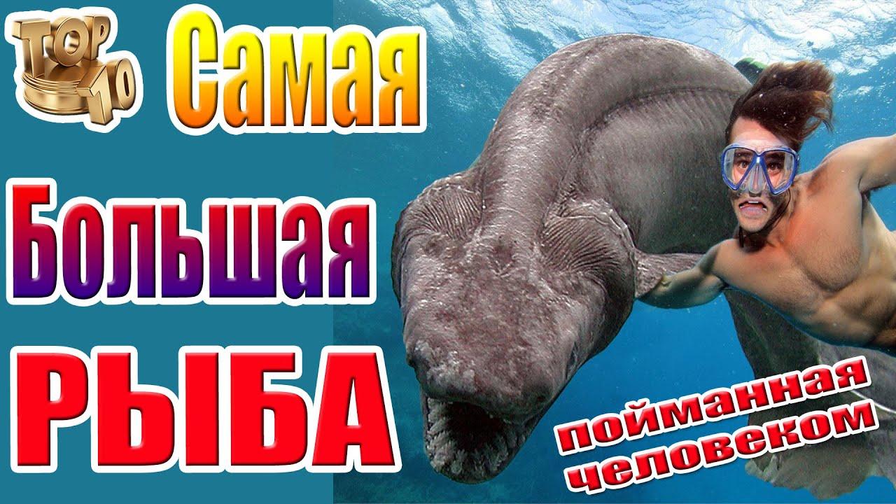 Самые большие рыбы мира
