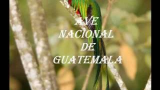 GUATEMALA quetzal cultura maya musica folklorica