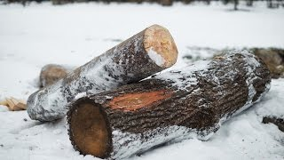 Раскалывание дубового бревна на пластины (ускоренное видео)