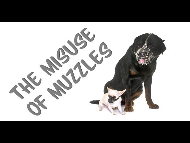 The misuse of muzzles in dog training