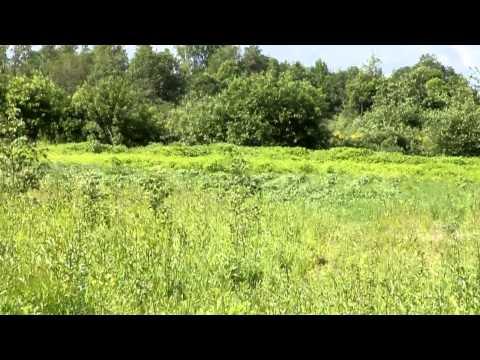 видео: распопов. Поле без пахоты. Новые идеи земледелия.avi