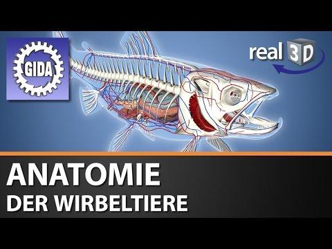 GIDA - Anatomie der Wirbeltiere - Biologie - real3D Software ...