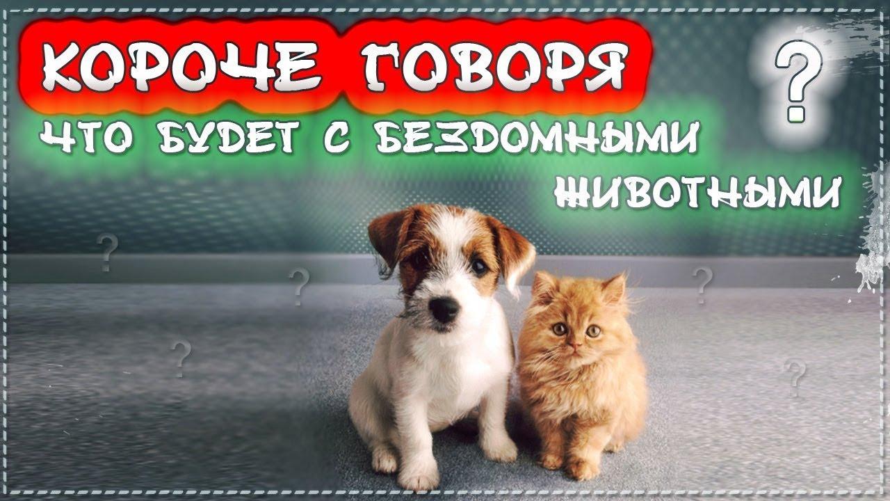 КОРОЧЕ ГОВОРЯ, ЧТО БУДЕТ С БЕЗДОМНЫМИ ЖИВОТНЫМИ [От первого лица] Бездомный котенок Лайки и щенок