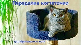 СМЕШНОЙ Гарри. Делаем  КОГТЕТОЧКУ для британского кота. / Big british cat and his hous