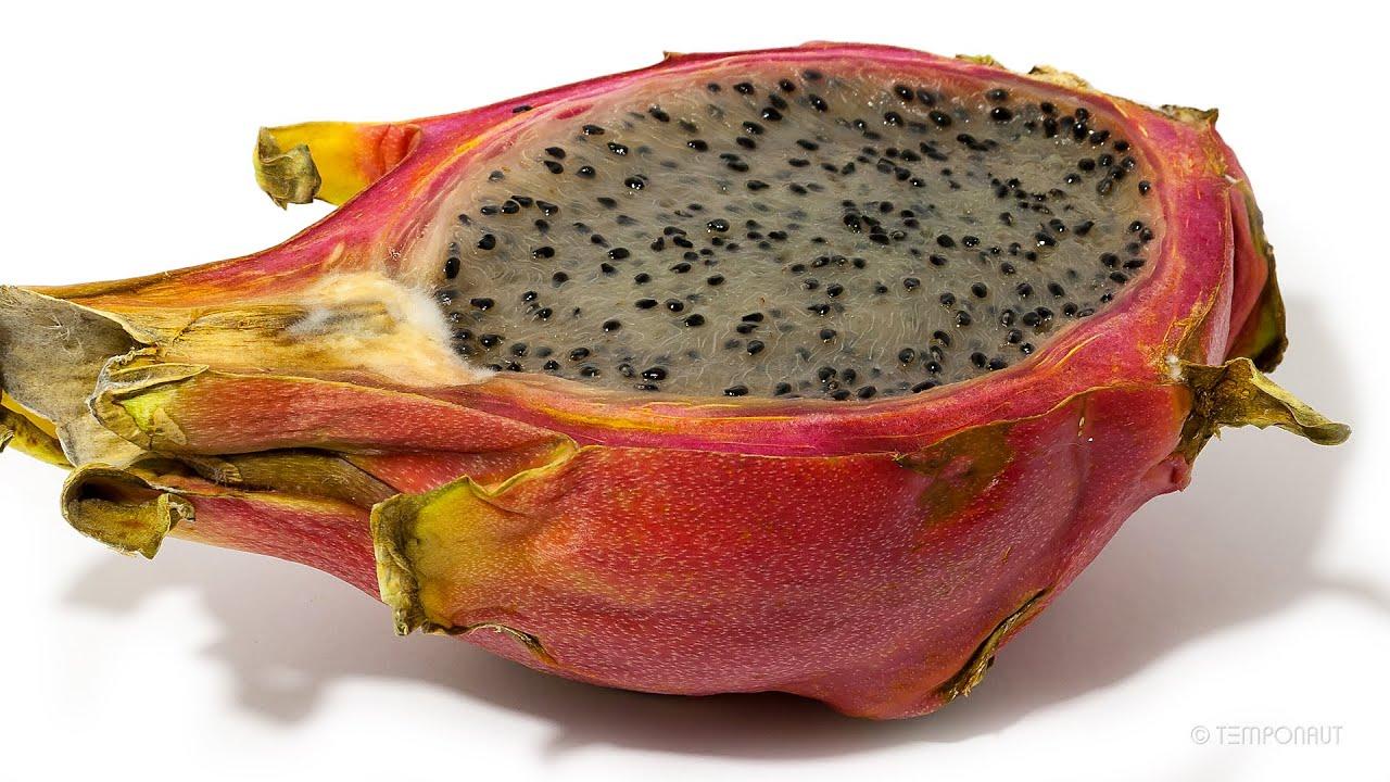 Dragon Fruitको लागि तस्बिर परिणाम