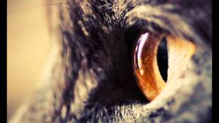 Run Away (feat. Jan Blomqvist) - Orginal Version