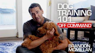 Dog Training 101: Off Command   Brandon McMillan