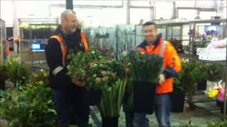 Melbourne Wholesale Flower market